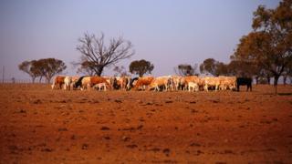 New South Wales eyaletinde kuraklıktan etkilenen bir çiftlik.