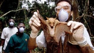 Investigador con un pteropódido, de la familia de los murciélagos.