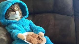 The image of the cat wearing a Cookie Monster outfit and appearing to hold a plate of biscuits