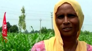 Punjab, Agriculture