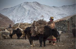 Two herders load up their yaks