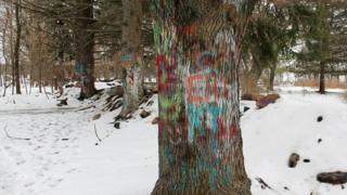 Graffiti on a row of trees