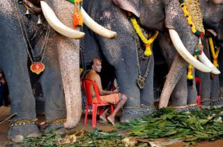 A mahout sits between elephants