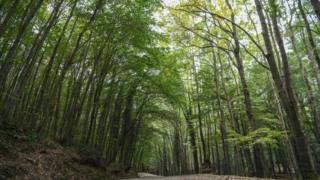 Floresta de Belgrado