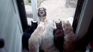 Коти і собака