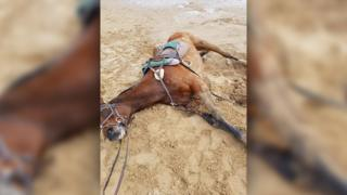 Horse stuck in sand