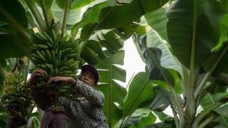 စည်းကမ်းမလိုက်နာတဲ့သူတွေကို စိုက်ပျိုးခွင့် လုံးဝပိတ်ပင်တာ စတာတွေပါဝင်မှာ