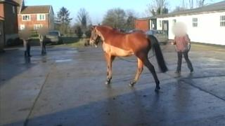 One of the horses