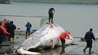 Baleia caçada