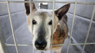 被關在籠裏的小狗