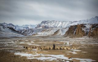 A shepherd and his herd