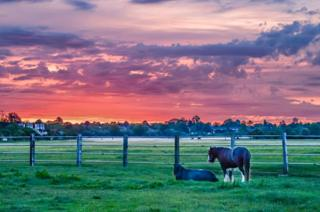 Sunrise over a field with horses