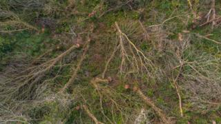 Aerial image of felled trees