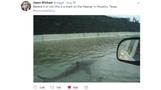 Tweet saying believe it or not, this is a shark on the freeway in Houston, Texas.