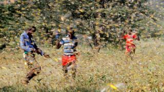 Men in Kenya attempt to fend off hordes of locusts, January 2020