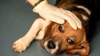Un perro sujetado por un veterinario