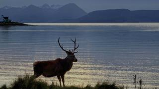 Picture of stag on the bay at Applecross, with the Cuillin mountains in the background