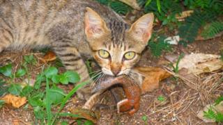 Gato com lagarto na boca