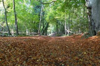 Woodland covered in leaves