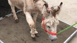 Eeyore the donkey