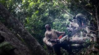 Exploitation forestière au Gabon