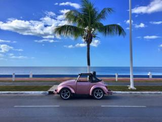 Volkswagen Beetle on a road in front of a tree and the sea