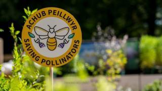 National Botanic Garden of Wales Pollinator sign