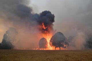 Smoke and flames rise from burning trees