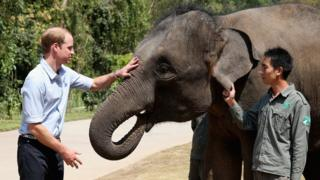 Prince William and an elephant