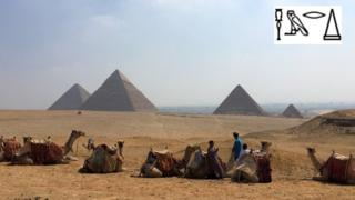 Camels in fron t f the pyramids of Giza