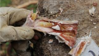 Marrow inside a bone after six weeks of storage