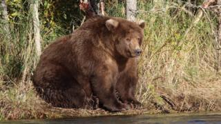 Large bear sitting by side of river