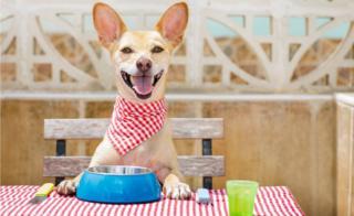Perro listo para comer