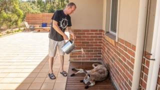 A man waters down a kangaroo outside his house