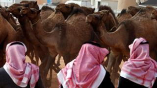 Saudi men stand next to camels as they participate in King Abdulaziz Camel Festival in Rimah Governorate, north-east of Riyadh, Saudi Arabia January 19, 2018