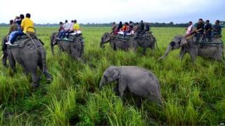 हाथियों की सवारी करते सैलानी