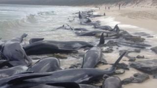 ऑस्ट्रेलिया, व्हेल, समुद्री जीवन
