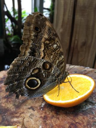 butterfly on a slice of orange