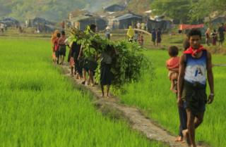 A young Rohingya boy carries branches to construct a makeshift shanty