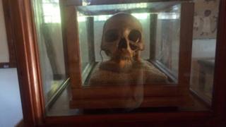 Skull in the museum