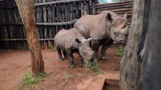 Amasatura atungiwe mu ruhongore rwa Kagera mu Rwanda