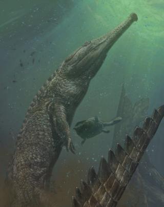 Machimosaurus