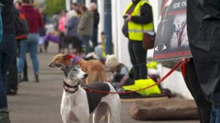 Greyhounds with campaigners