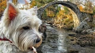 Casper the dog in Carrbridge