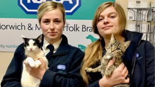 RSPCA workers with the cats