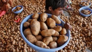 पेप्सिको, आलू, किसान, भारत, आलू की खेती