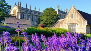 Lavender at Christ Church, Oxford