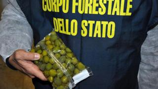 Olives seized in Italy which had been painted with copper sulphate solutions to enhance their colour