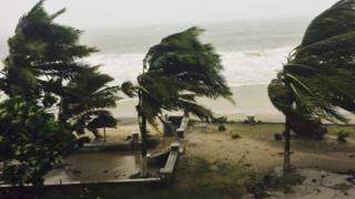 Trees being blown in cyclone