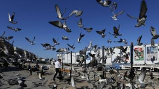 Pigeons fly in front of the electoral campaign posters for the upcoming legislative election in Algiers, Algeria, 12 April 2017. Photo/EPA